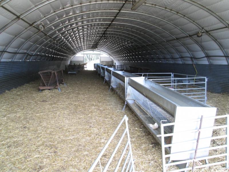 Allevamento di ovini - Francia